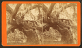 Large Oak tree covered with Spanish moss, by Havens, O. Pierre, 1838-1912.png