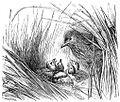 Lark Nest.jpg