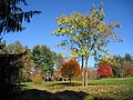 Lasdon Park and Arboretum, Somers, NY - IMG 1535.jpg