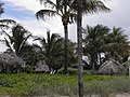 Lauderdale by the sea palms - panoramio.jpg