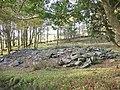 Leaf strewn remains of Plas Uwch Llyn - geograph.org.uk - 272541.jpg