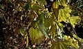 Leaves -- Day -061 (1821263528).jpg