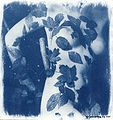 Leaves cyanotype.jpg