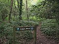 Ledgers Wood and path (geograph 4157344).jpg