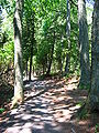 Lemoine-Point-Conservation-Area woodland-2006jul02.jpg