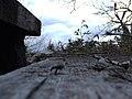 Linguaglossa-Etna-Volcano-Sicily-Italy - Creative Commons by gnuckx (3496313624).jpg