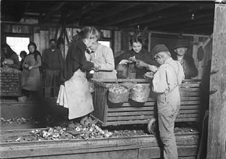 Lewis Hine - Little Lottie, a regular oyster shucker in Alabama Canning Co. (Bayou La Batre, Alabama, 1911)