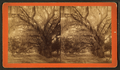 Live Oak Avenue, Bonaventure, from Robert N. Dennis collection of stereoscopic views 16.png