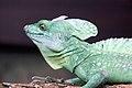 Lizard - Bristol Zoo (4322470015).jpg