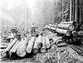 Loading logs on railroad flatcars using steam donkey engine, Pierce County, ca 1904 (INDOCC 312).jpg