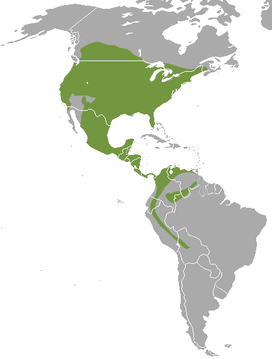 Long-tailed weasel range