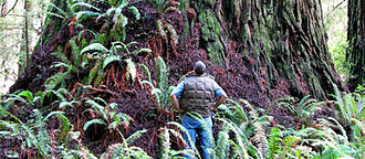 The Wild Trees - Arborist standing next to a redwood named Screaming Titans, described in a chapter of the book – The Lost Valley – within section 4: Love in Zeus. This redwood tree is located in the Grove of Titans