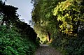 Low light hollow path - panoramio.jpg