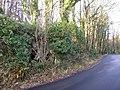 Low limestone scar, edge of Hale Moss - geograph.org.uk - 1615474.jpg