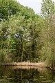 Münster, Wolbeck, Wolbecker Tiergarten, Naturwaldzelle -Teppes Viertel- -- 2014 -- 7080.jpg