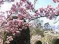 Magnolienzweig.jpg