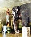 Mahout washing his elephant. Temple in Kanchipuram, Tamil Nadu.jpg