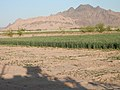 Maiwand, Afghanistan - panoramio (23).jpg