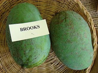 Brooks (mango) - Display of unripe Brooks mangoes at the Redland Summer Fruit Festival, Fruit and Spice Park, Homestead, Florida