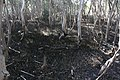 Mangroves of Las Piñas-Parañaque Critical Habitat and Ecotourism Area (LPPCHEA).jpg