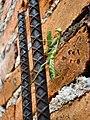 Mantis (5074516129).jpg