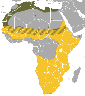 Map of the distribution of Ictonyx in Africa