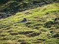 Marmottes - panoramio.jpg