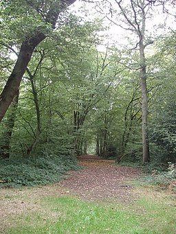 Mature trees in Bayhurst Wood Country Park - geograph.org.uk - 62489
