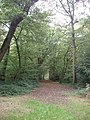Mature trees in Bayhurst Wood Country Park - geograph.org.uk - 62489.jpg
