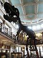 Mcgill redpath m albertosaurus.jpg