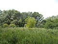 Merzse Marsh Nature Trail around 4th station, meadow and oak forest, Rákoshegy, 2016 Hungary.jpg