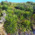 Miami Beach - Sand Dunes Flora - Green Plants and Bushes 02.jpg