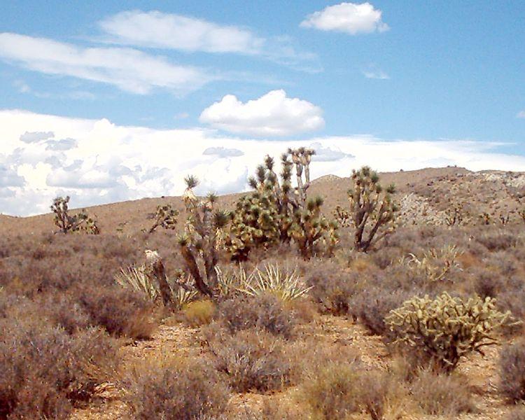 File:Mojave2.jpg