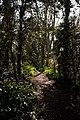 Mont Ubé woodland.jpg
