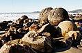 More Boulders (5) (8137774503).jpg