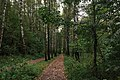 Moscow, road through Losiny Ostrov forest (31330250340).jpg