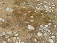 Moss, rocks, and bare soil, by Great Sacandaga Lake (2008).jpg