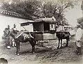 Mule litter, Peking NA01-91.jpg