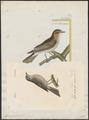 Muscicapa griseola - 1842-1848 - Print - Iconographia Zoologica - Special Collections University of Amsterdam - UBA01 IZ16500175.tif