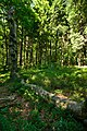 Národní přírodní rezervace Bukačka, okres Rychnov nad Kněžnou (04).jpg