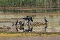 Nallıhan Davutoğlan Kuş Cenneti - Dal Üzerindeki Kuşlar - 9.jpg