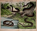 Natural history of the animal kingdom for the use of young people (5974970032).jpg