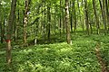 Nature reserve Žižkův vrch in summer 2012 (3).JPG