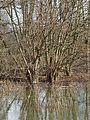 Naturschutzgebiet Alte Leine - Hochwasser (4).jpg