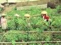 File:Nederlandse ontwikkelingshulp voor Indonesië, nieuw research instituut voor thee en kina op West Java Weeknummer 75-13 - Open Beelden - 17690.ogv