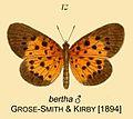 Nero male as bertha inGSK1894.jpg