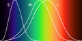 Normalized response spectra of human cones.png