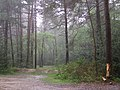 North Gate car park in a downpour, New Forest - geograph.org.uk - 173042.jpg