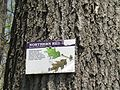 Northern Red Oak 2016-05-10 064.jpg