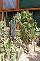 Nyíregyháza Zoo, succulents-5.jpg